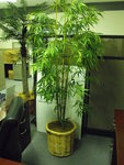 Specialty Items Used Large Artificial Plant